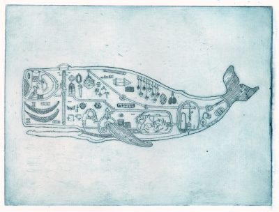 WhaleElevation
